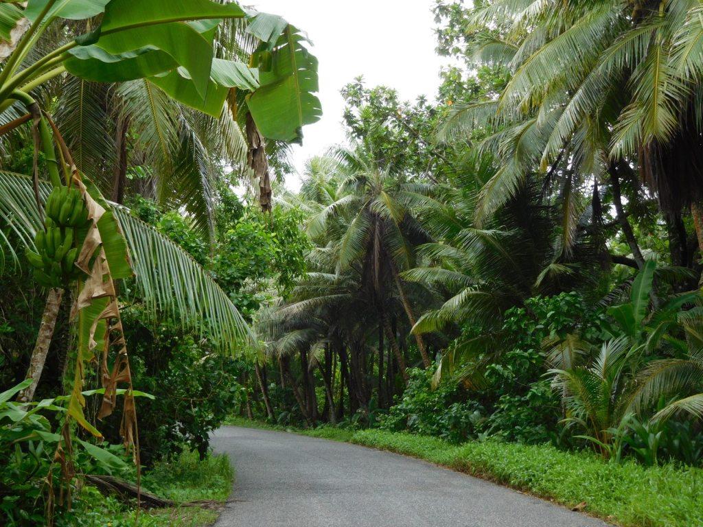 Saarta ympäröivä tie vehreällä Kosraella