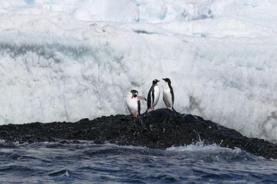 Keisaripingviinit-12