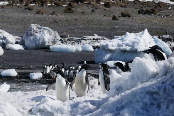 Keisaripingviinit-13