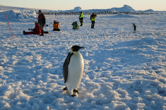 Keisaripingviinit-17