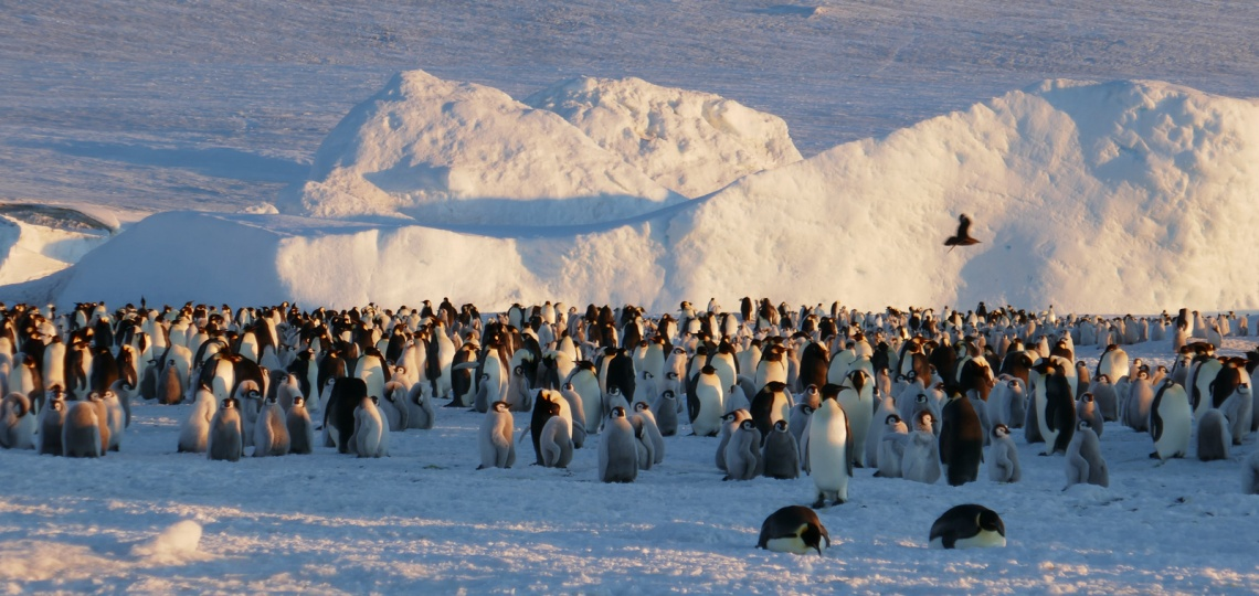 Keisaripingviinit-18
