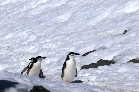 Keisaripingviinit-20
