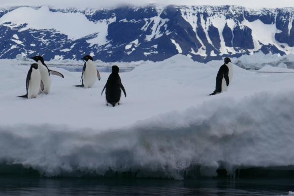 Keisaripingviinit-5